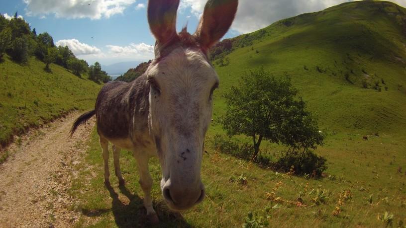 Mon copain Ponpon, La mule ! :D